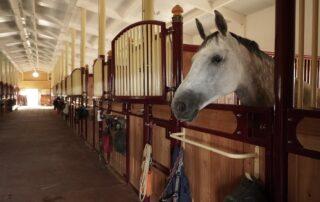 Постой лошадей в Los Establos