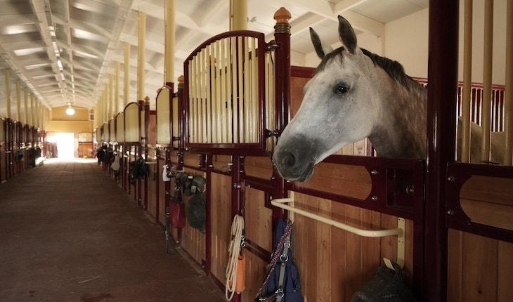 Постой лошадей в конном клубе Los Establos